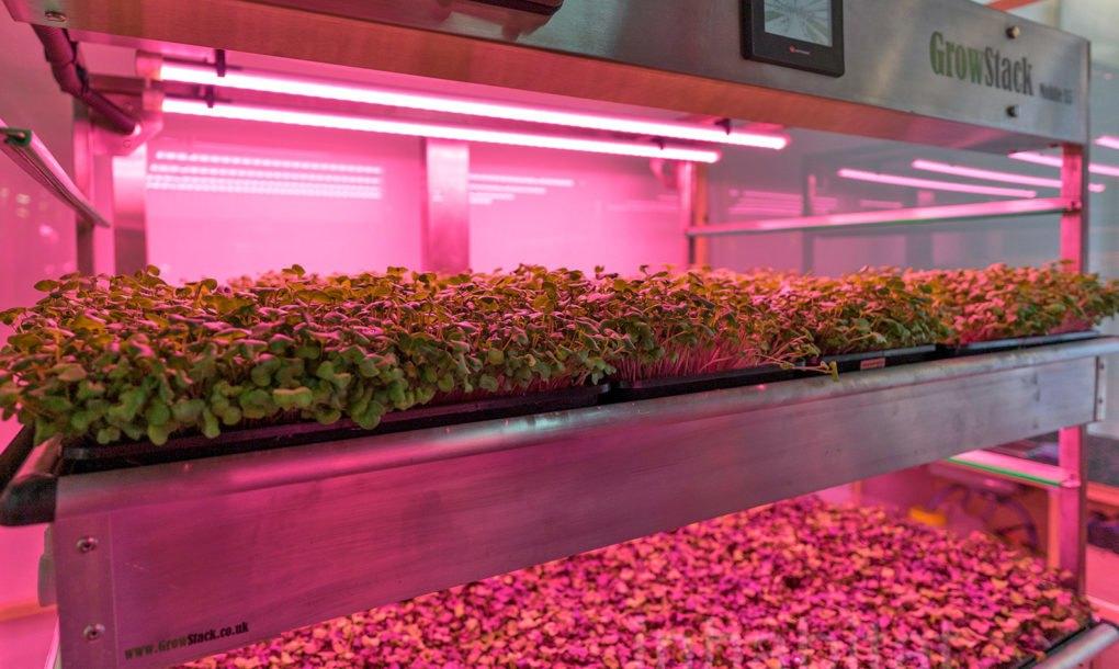 vertical-farming-2-1020x610.jpg