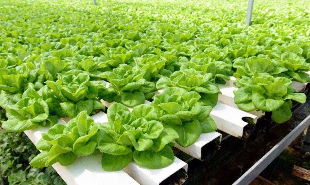 vertical-farming-4-1020x610.jpg