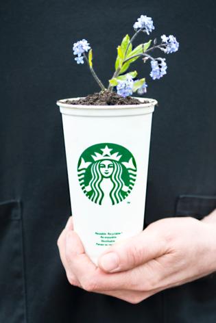Starbucks_02-315x472.png