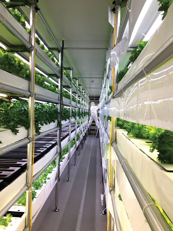 Photo: Harry Goldstein   Working the (Indoor) Farm: A bunny-suited farmer wrangles trays of frill lettuce toward harvest in Espec Mic's VegetaFarm.