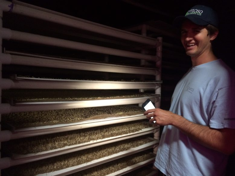 Joe Chiappetta inside the dark germination room.