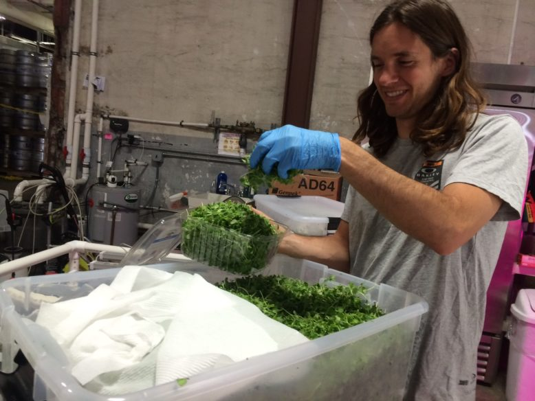 Chris Chiappetta fills a clamshell container with microgreens.
