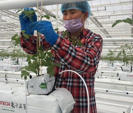 Workers are checking the growth situation of seedings in the greenhouse