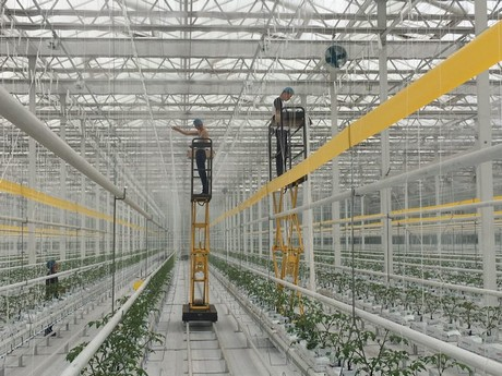 Workers are operating in the greenhouse