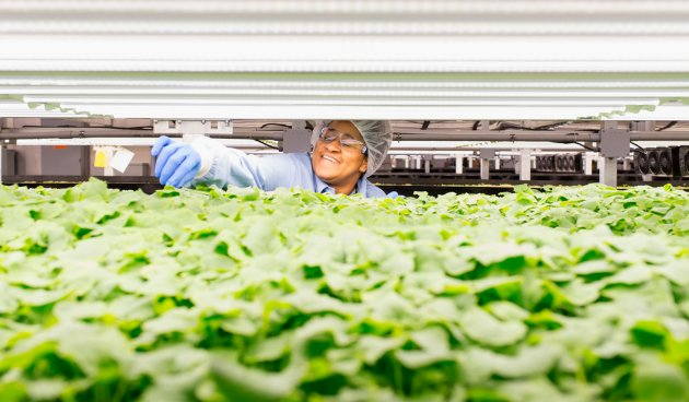 AeroFarms employee Samentha Evans-Toor checks the plant growth in a Newark, New Jersey, facility. CREDIT: Alex Kwok