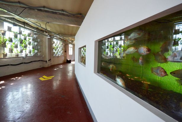 The high-level market gardens would rely on aquaponics – using live fish to provide proteins to help plants grow