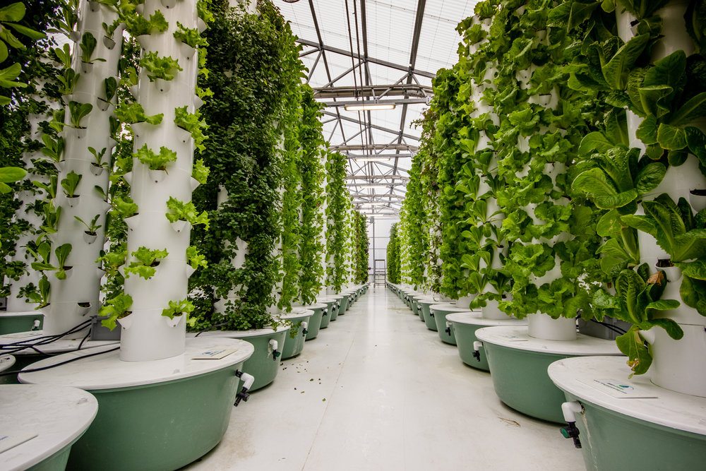 Towers and other vertical approaches are increasingly popular for aeroponics systems. Since the roots have a need to spread out, this is a clever way to save space. A vertical setup also allows misting devices to be placed at the top, allowing gravity to distribute the moisture.  By Globe Guide Media Inc / shutterstock.com