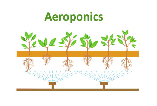 A simplified diagram of an aeroponic system. By Lilkin / shutterstock.com.