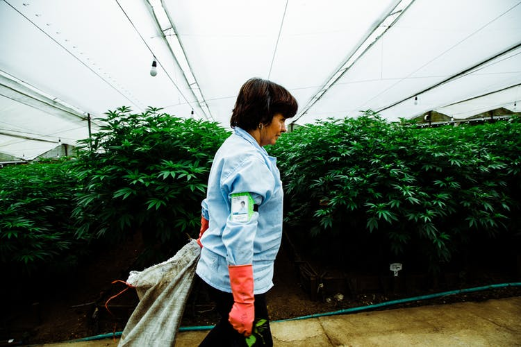 Pharmacielo-could-become-a-leader-in-the-global-medical-cannabis-market-8.jpg