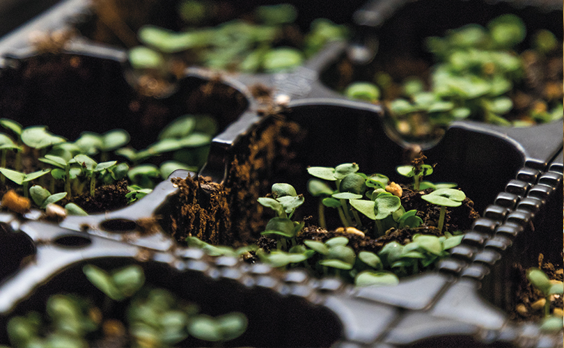 Innovation enables the farm to grow 15 varieties of microgreens using one type of substrate