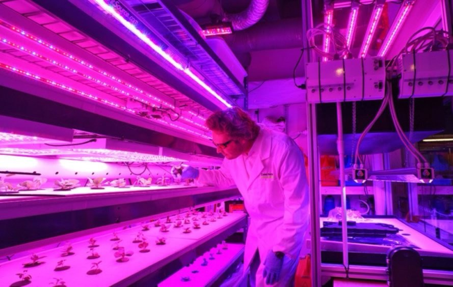 Target has collaborated with MIT to create a hydroponics garden in several of its store, offering produce directly to customers.