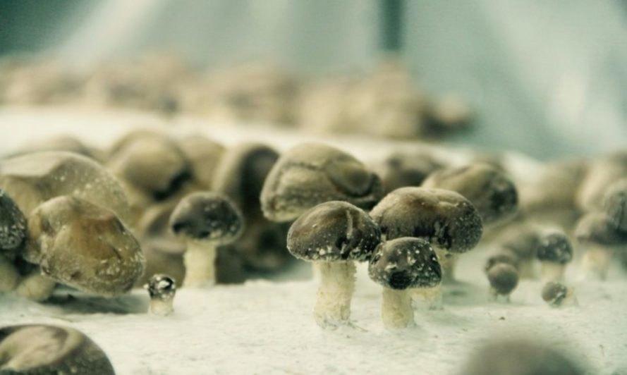 Tiny mushrooms sprouting at the underground farm La Caverne.
