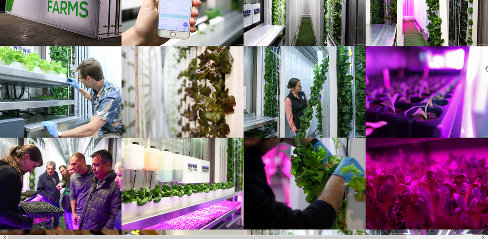 Seedling Table Pics.jpg