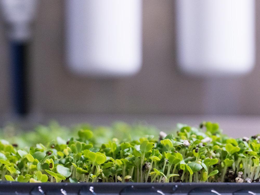 LGM_seedlings5.jpg