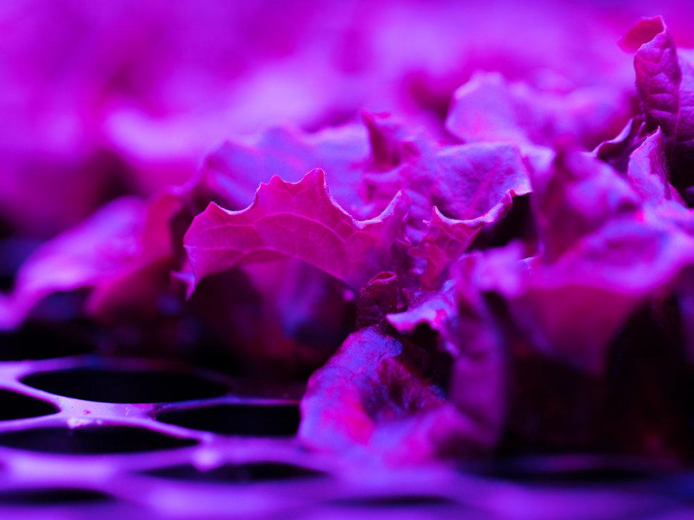 LGM_seedlings1.jpg