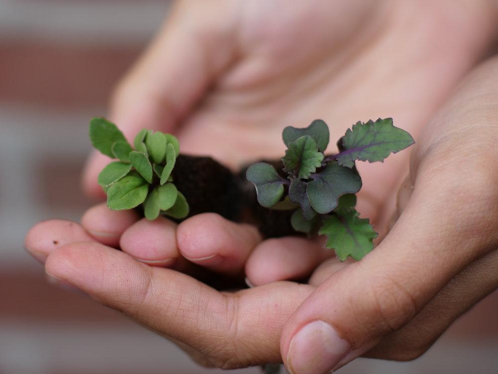 Seedlings in Hand.JPG