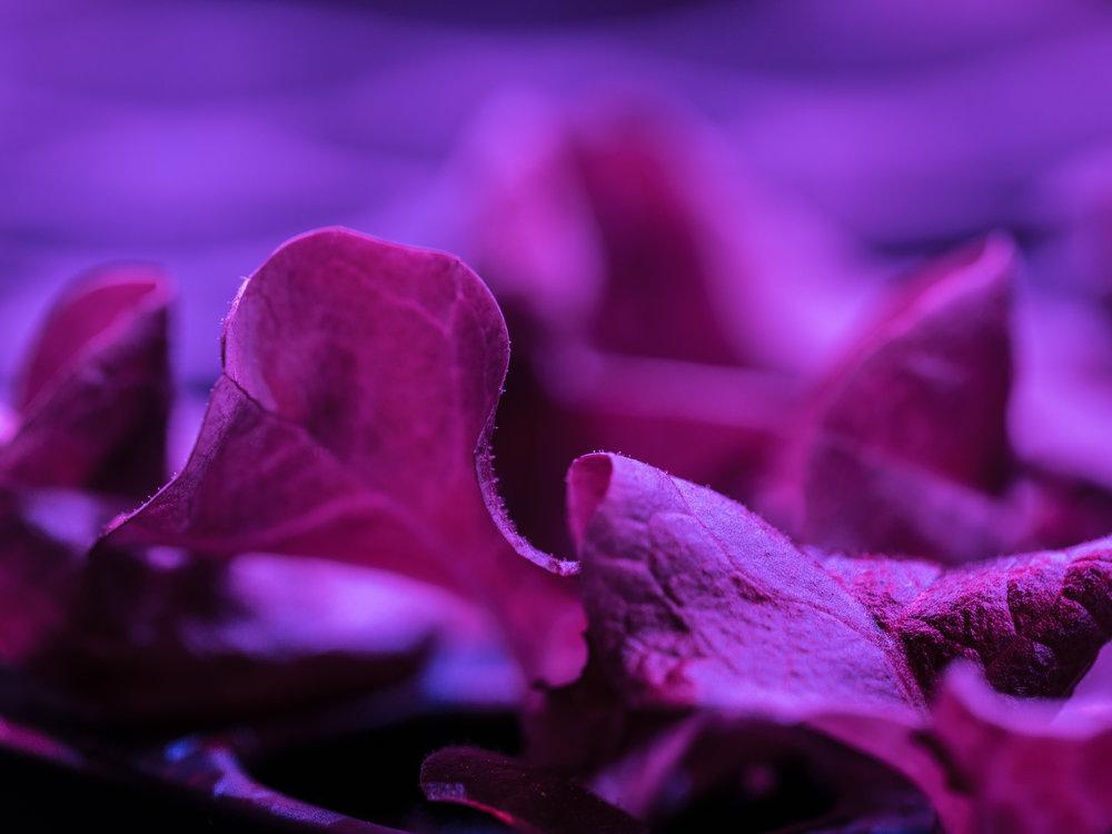 LGM_seedlings2.jpg