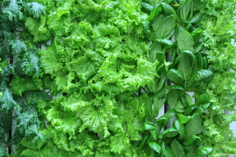 LGM_Leafy Greens.jpg