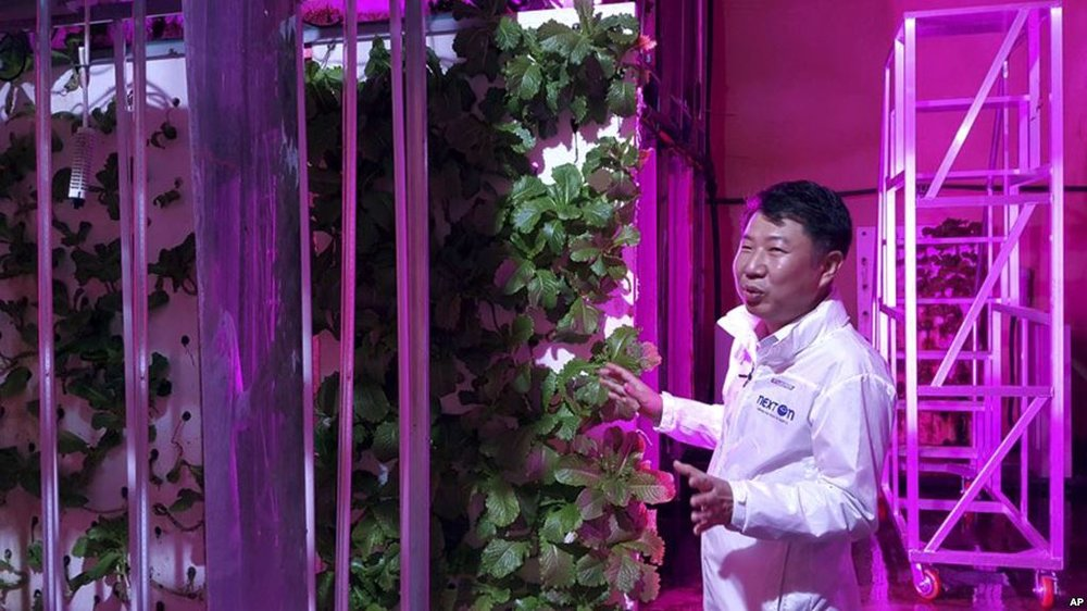 In this Aug. 9, 2018, photo, head of NextOn Choi Jae Bin explains how his farm's crop cultivation system works. (AP Photo/Han Myung Oh)