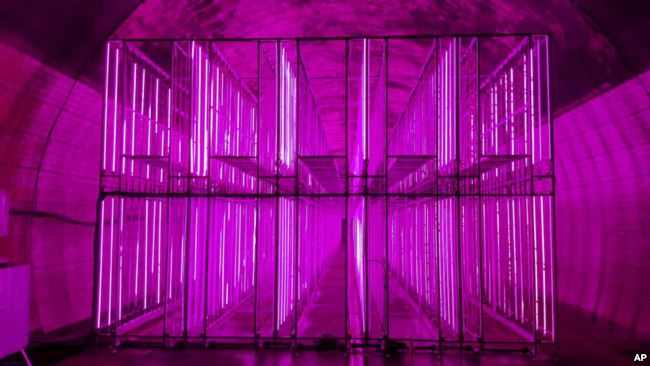In this Aug. 9, 2018, photo, rows of illuminated grow spaces fill the tunnel-based vertical indoor farm NextOn in Okcheon, South Korea. (AP Photo/Han Myung Oh)
