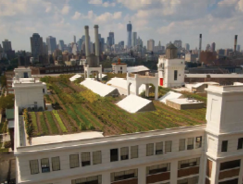 Brooklyn Grange's Brooklyn Naval Yard FarmPhoto courtesy of Brooklyn Grange