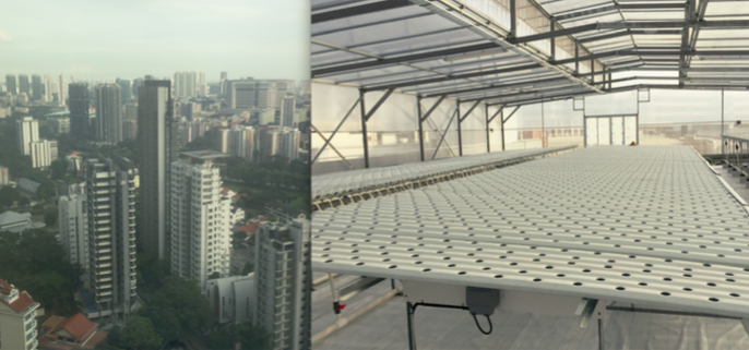 Rooftop Farming high above the Singapore Skyline with completed AmHydro NFT system ready to plant