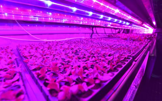 Lettuce seedlings grow under grow lights in seedling troughs in a shipping container at Cass Community Social Services on Wednesday. (Photo: Todd McInturf, The Detroit News)  Buy Photo
