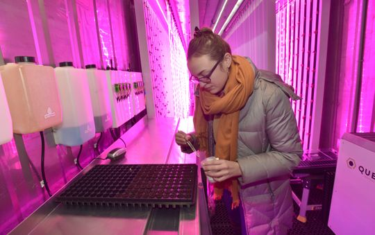 Freight Farm assistant Charlotte Gale of Detroit inserts seeds into peat moss pods, where they start to grow, in a converted shipping container at Cass Community Social Services in Detroit.  (Photo: Todd McInturf, The Detroit News)