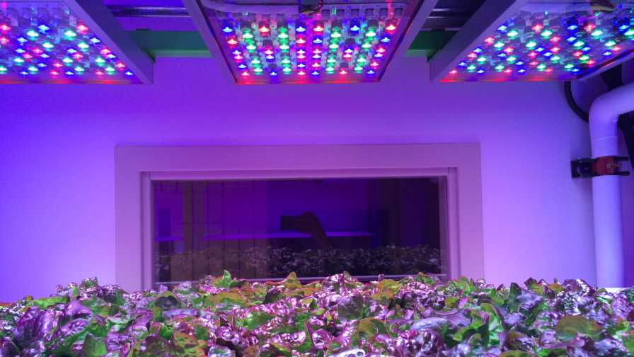 Phytofy RL is an LED horticultural lighting system for research applications with real-time control and scheduling features for each individual channel. The calibrated system is capable of delivering light treatments with varying spectra (wavelength and intensity) for horticulture research, including far-red end-of-day treatment, brief UV light, night interruption lighting, etc. Photo courtesy of Osram