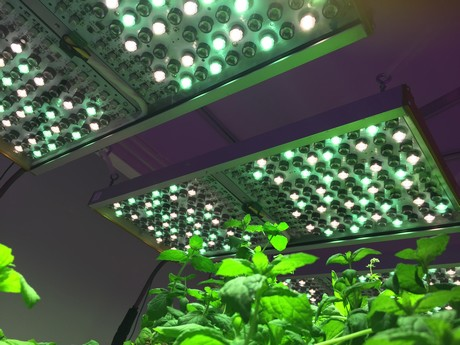 Use of Phytofy RL allows the researchers to evaluate the most varied light recipes, without having to change luminaires between individual tests.