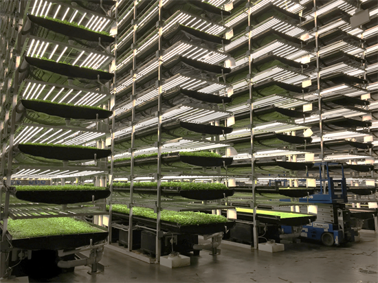 Vertical farms use multi-layered controlled environments to deliver significantly greater yields (image courtesy fo AeroFarms).