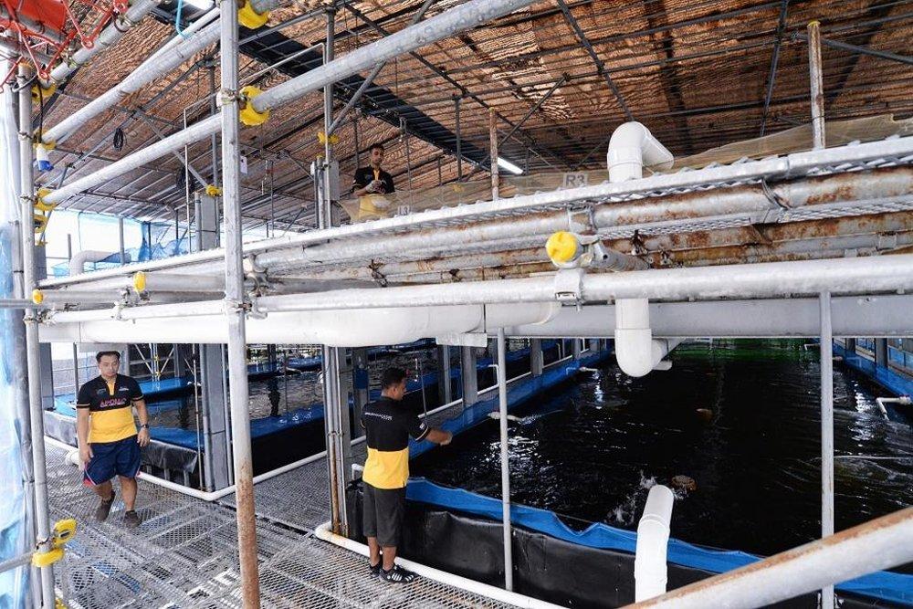 Apollo Aquaculture Group's prototype vertical fish farm at Lim Chu Kang. TODAY file photo