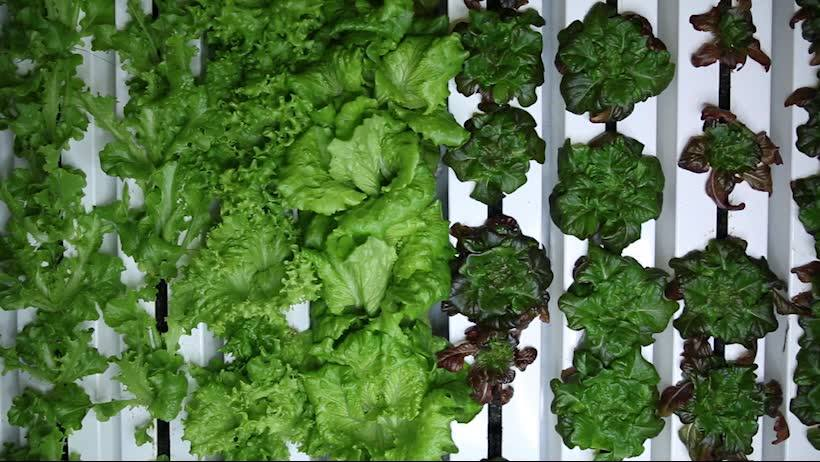 Growing-Greens-_-Freight-Farms-on-Facebook.jpg