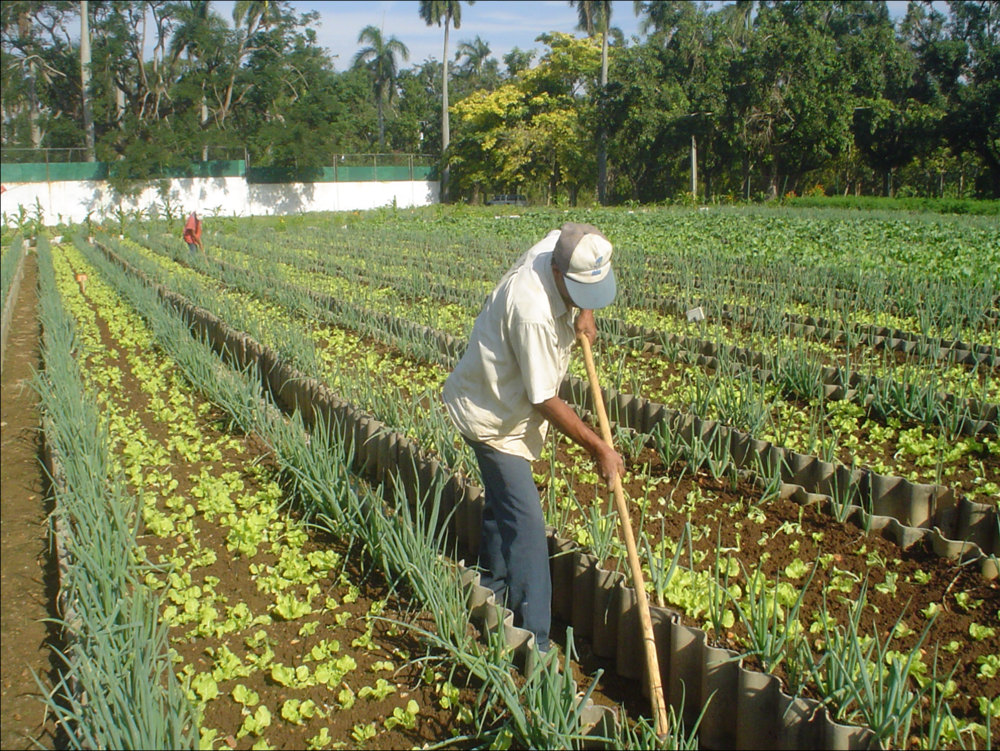 An organic farm in Havana, Cuba, that produces outputs averaging 20 kilograms (44 pounds) per square meter per year without agrochemical inputs.Miguel Altieri,  CC BY-ND