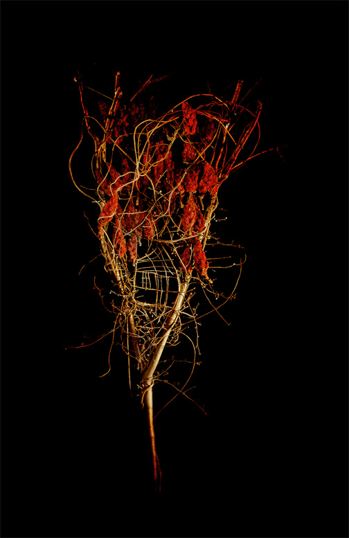 Amber Sumac, Photograph/Sculpture, Robert Hite, 2008