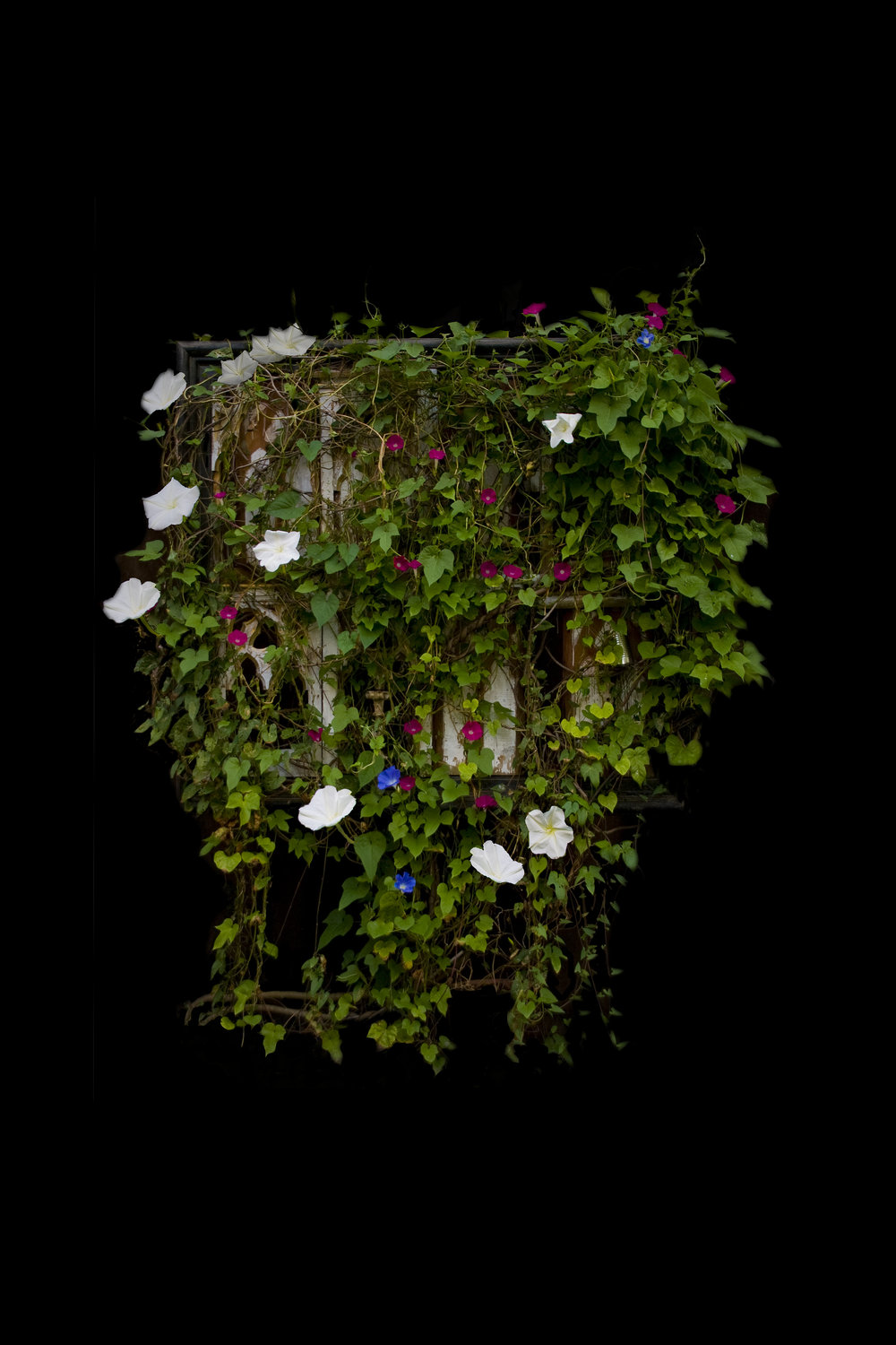 Moonflower Fullbloom, Photograph/Sculpture, Robert Hite, 2010