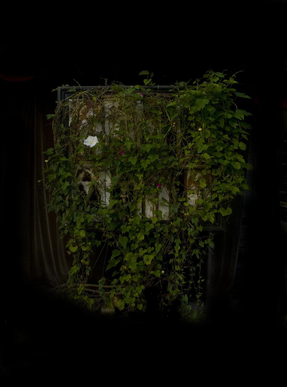 Moonflower, Photograph/Sculpture, 2010