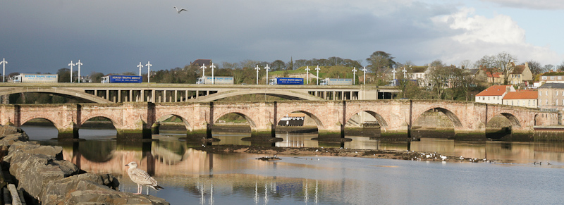 berwick-bridges-seagull-lorry-shot-banner-tweed