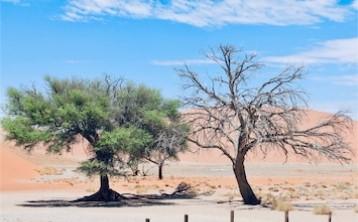 Alive in the Desert…..