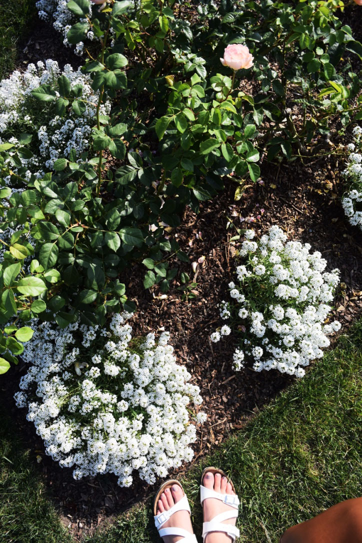 My trusty Birkenstocks matched one of my all time favorite flowers: alyssum.