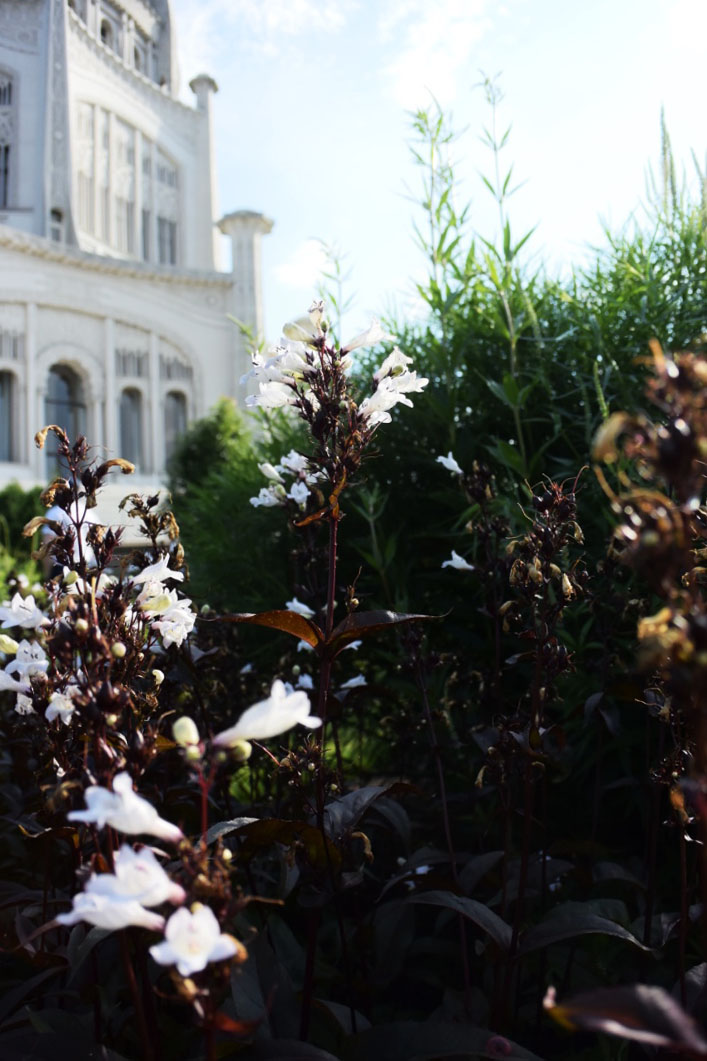 I think these were my favorite flowers at the temple. The dark maroon stems are so rich and lovely paired with the bright white flowers and surrounding greenery.