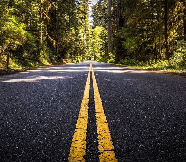 Endless road. Where does it lead to? 🌳📷🌎 #redwood #forest #oregon #roadtrip #explore #discover #nature #globetrotter #redwoodnationalpark #westcoast #impressive #travelabroad #naturephotography #travel #natgeoyourshot #fstoppers #outdoor #natgeo #landscape #landscapephotography #symmetry #usa #summertrip