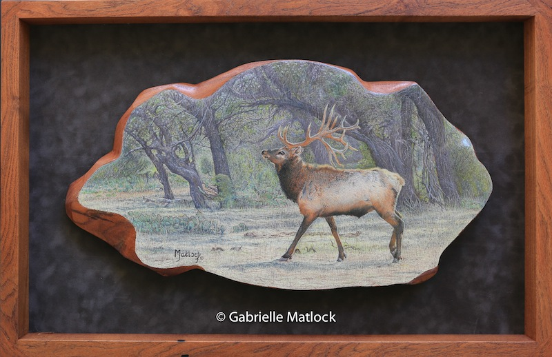 """Wapiti Pride""       Original   Colored Pencil on Mesquite"