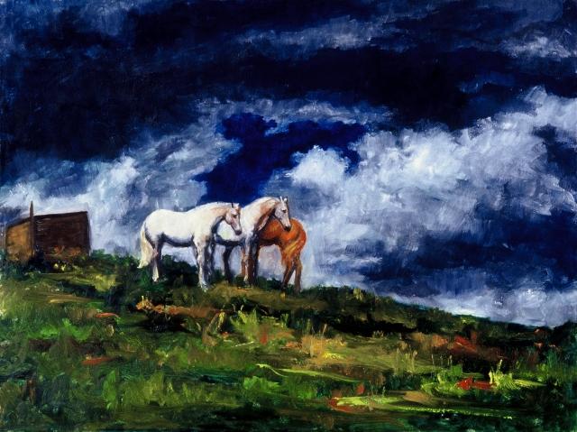 Horses, Colorado