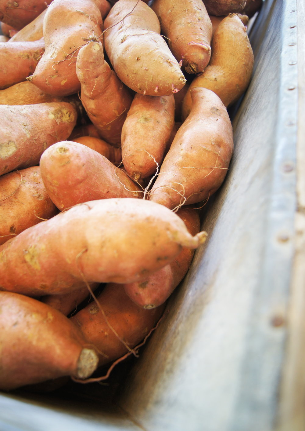 Delta Sweet Potatoes  /   Stone Hollow Farmstead CSA