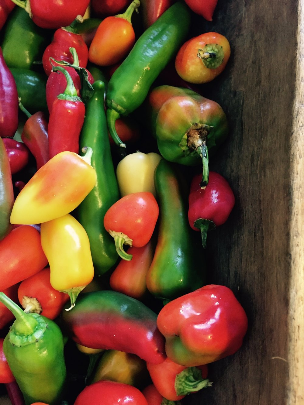 Aura, Tohi Romanians and Green Gourmet Peppers - Stone Hollow Farmstead CSA