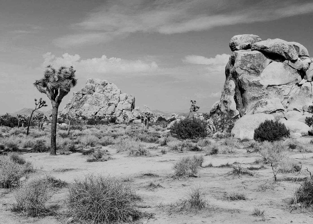 desertscape_02.jpg