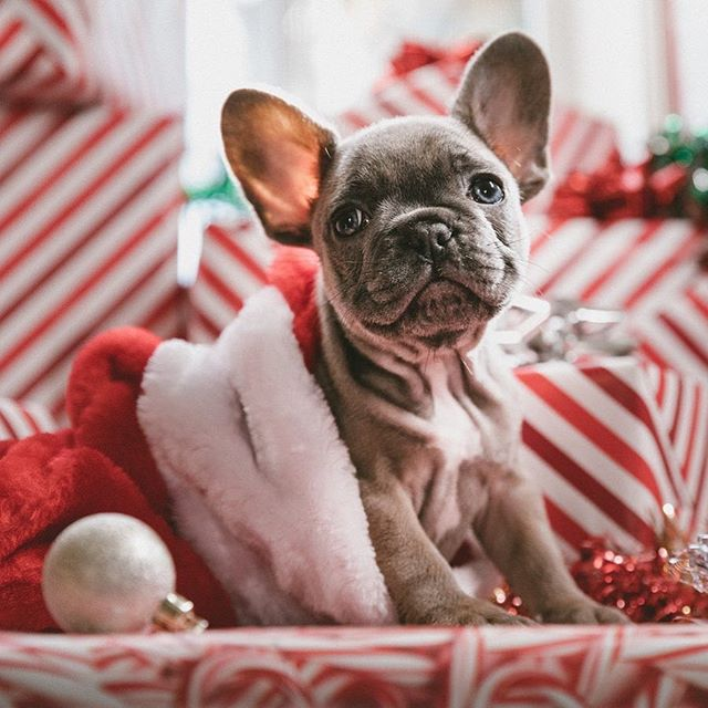 A couple last minute tickets for tonight's Very Vegan Xmas class with Cin of @creaturelesscomforts & Kate of @sydneyveganmarket are available! Find them at the @sydneycommunitycollege website and come and learn a bunch of delicious recipes for Xmas day and be as cute as this lil one!