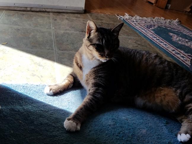 Cleo demanded dramatic lighting