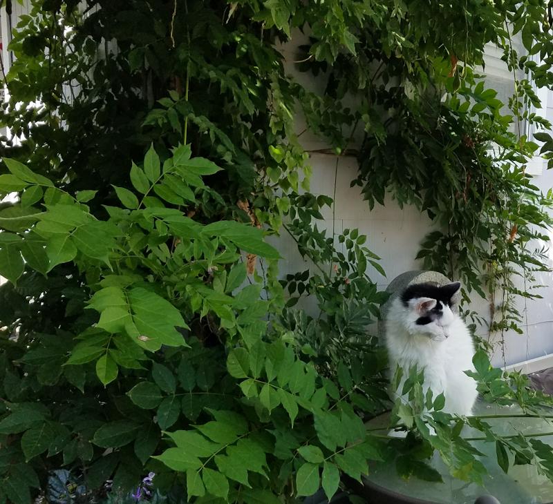 Anastasia enjoying springtime
